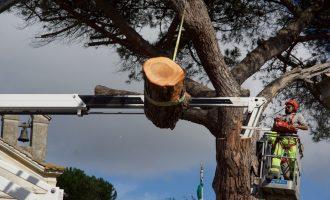 Ottantotto o centouno, gli anni del pino!