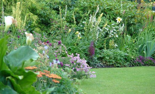 Verde Amaranto – Primo Corso di botanica e giardinaggio a Cesano